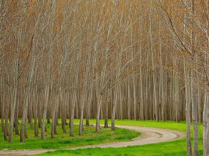 Kým zo sadenice stromu vznikne nábytok, uplynie aj 15 rokov